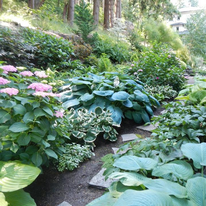 Glenn Landscape Plantings