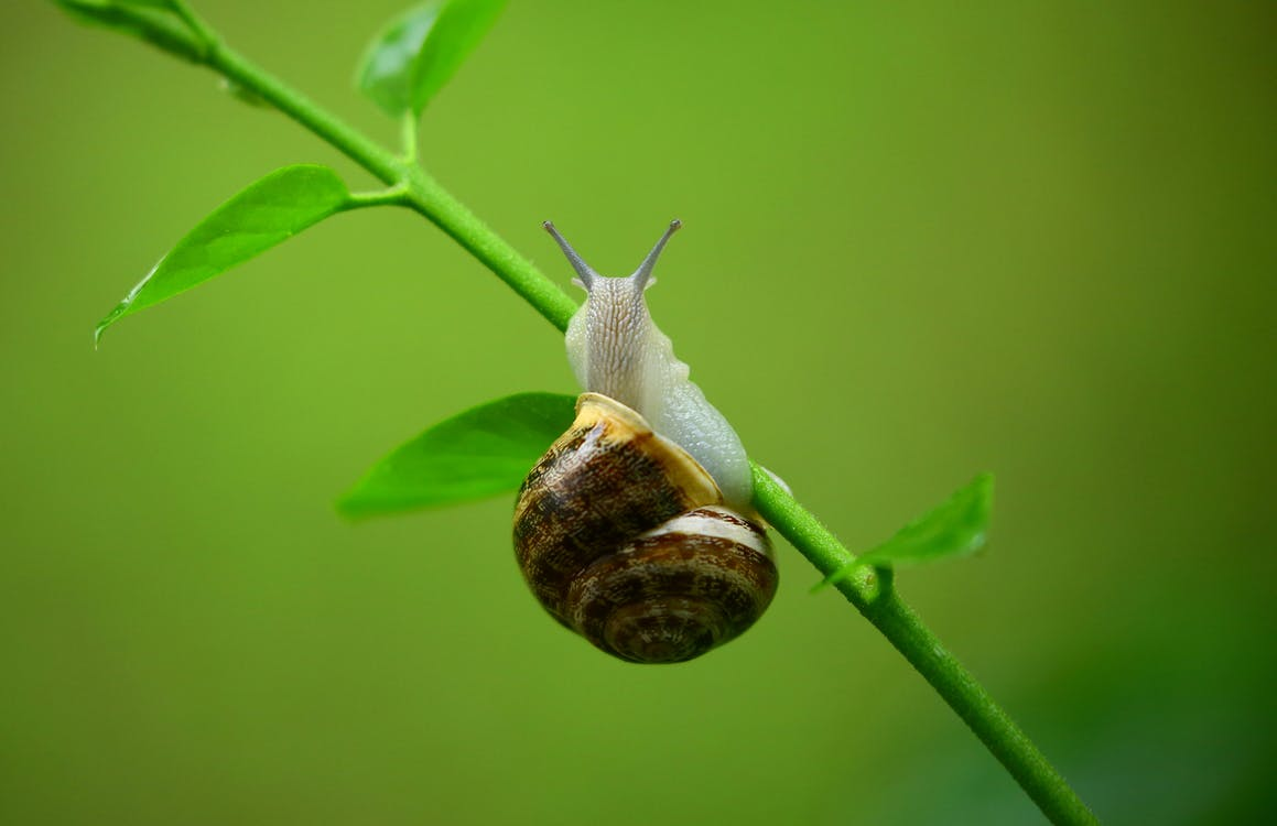 Landscape Yard Care: 5 Natural Ways To Get Rid Of Slugs And Snails