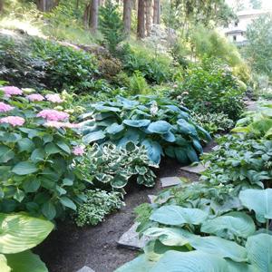 glenn-landscape-plantings