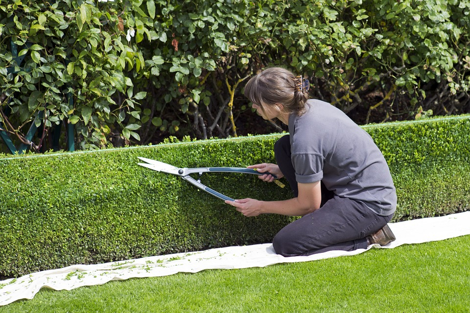 Choosing The Right Landscape Service Plan For You