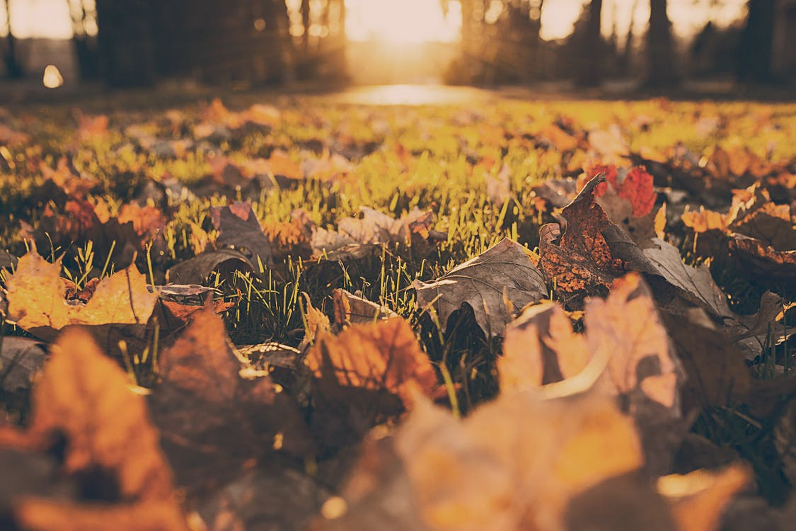 Mulching Your Leaves Into Your Lawn This Fall