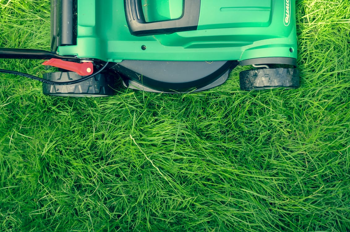 Early Spring Lawn Maintenance Tips
