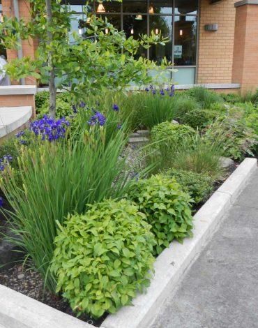 Glenn Landscape Storm Water Management & Drainage