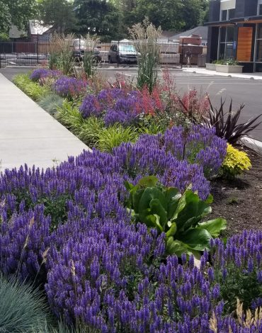HotSpring Landscaping and Planting